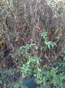 Tomato Mess