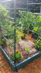 Weaving cherry and grape tomatoes through bars for support