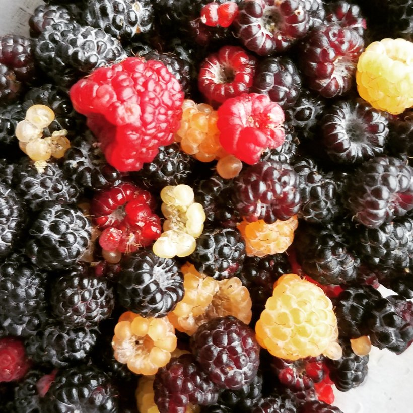 Mangled berries are still edible!