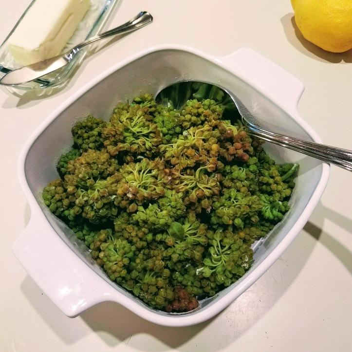 Milkweed. It's what's for dinner.
