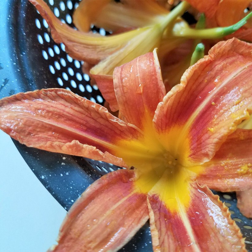 Washed and cleaned day lily flowers