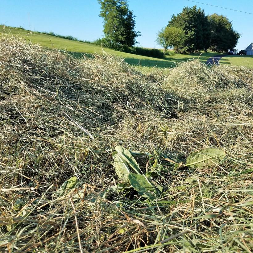 Here the milkweed grew