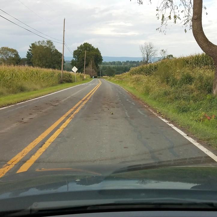 Roadside black walnuts in evidence