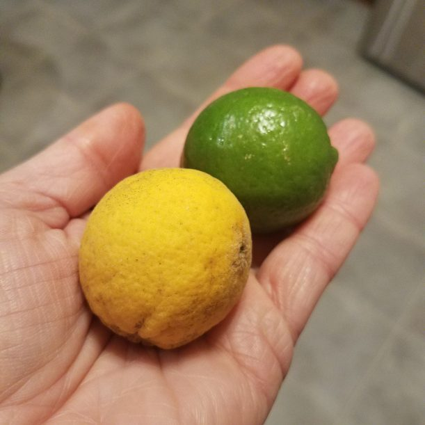 Flying Dragon Citrus compared to a Key Lime