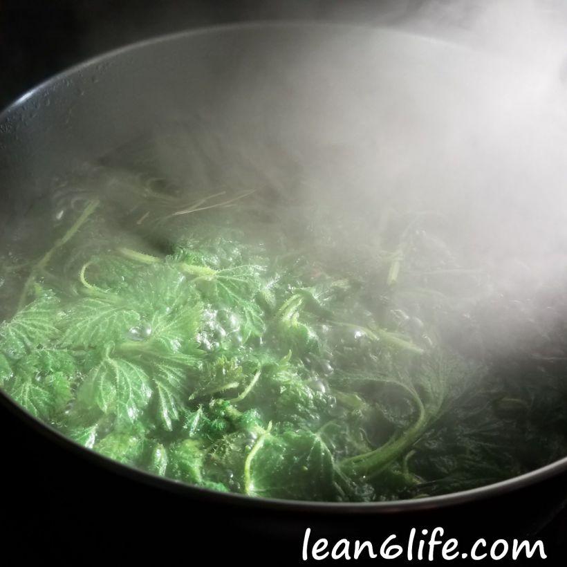 Boiling stinging nettle