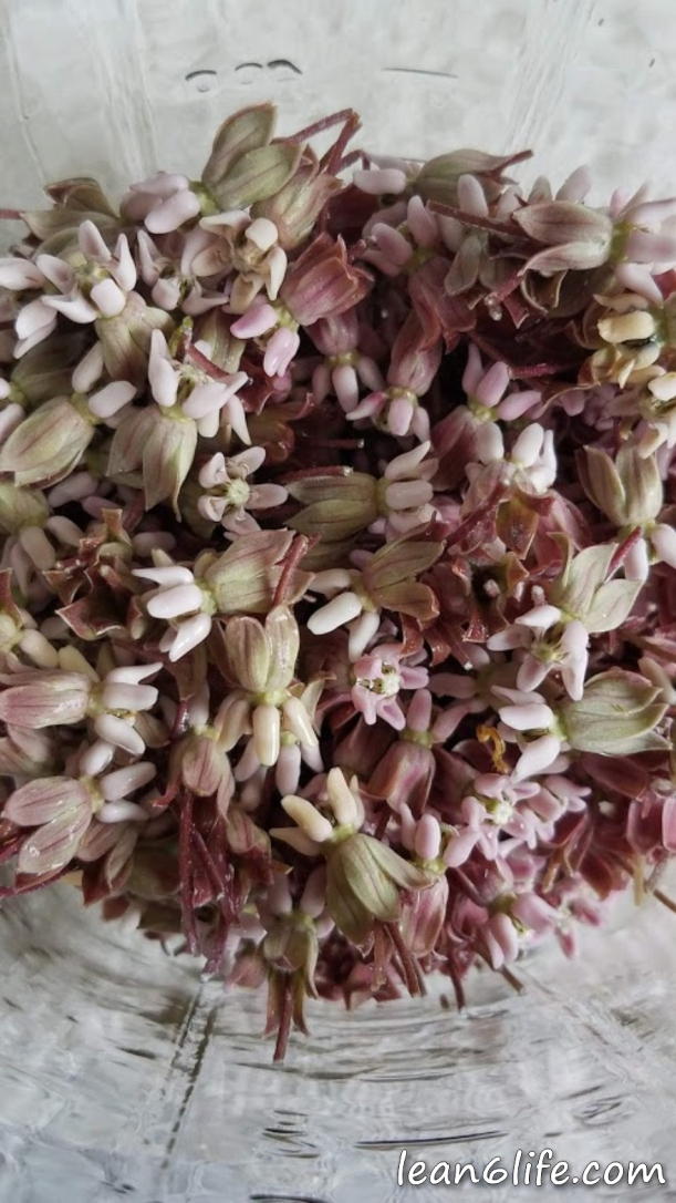 Milkweed flowers for liqueur