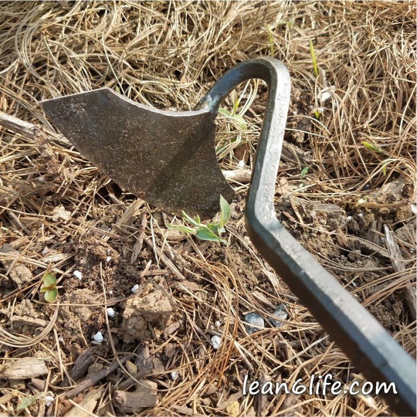 My new weeding tool