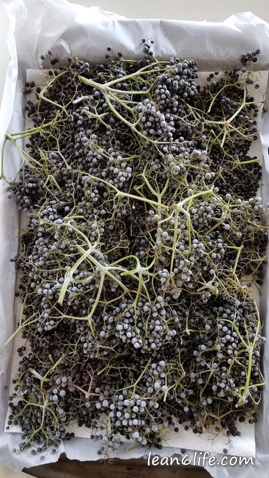 Frozen elderberries, ready to de-stem