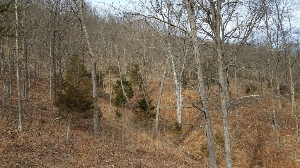 The steeply sloped forest floor might keep some plants from getting a foothold