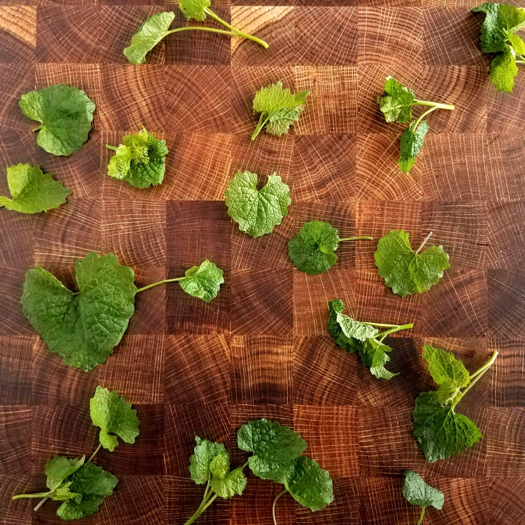 Garlic mustard leaves and flower buds add pungent flavor to savory dishes