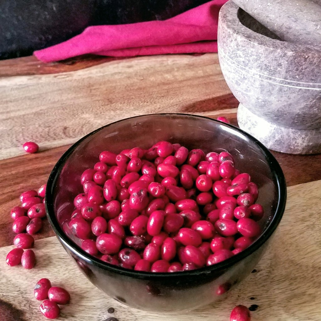 A bowl full of ripe spicebush berries