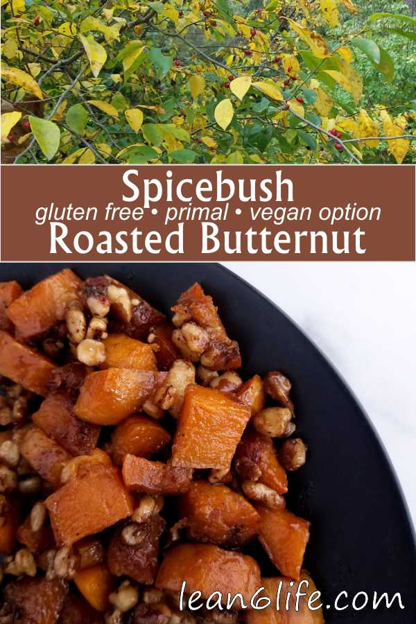 This spicebush roasted butternut squash recipe is a simple and tasty introduction to the flavor of spicebush berries. The recipe is gluten free, primal, and includes a vegan option.