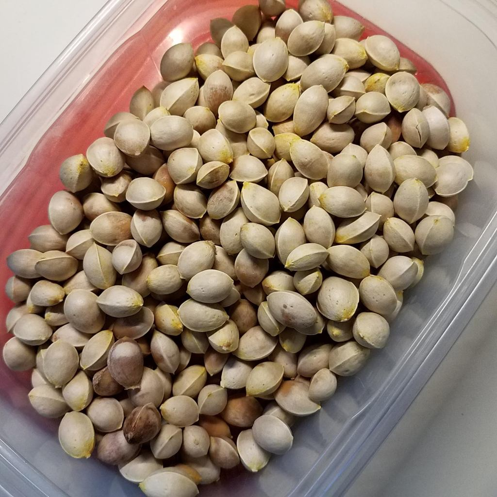 """Cleaned (but still """"fragrant""""!) gingko nuts"""