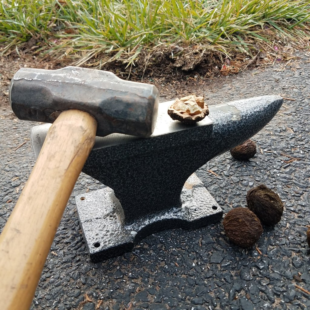 Crude but effective - smashing black walnuts with a sledgehammer and anvil