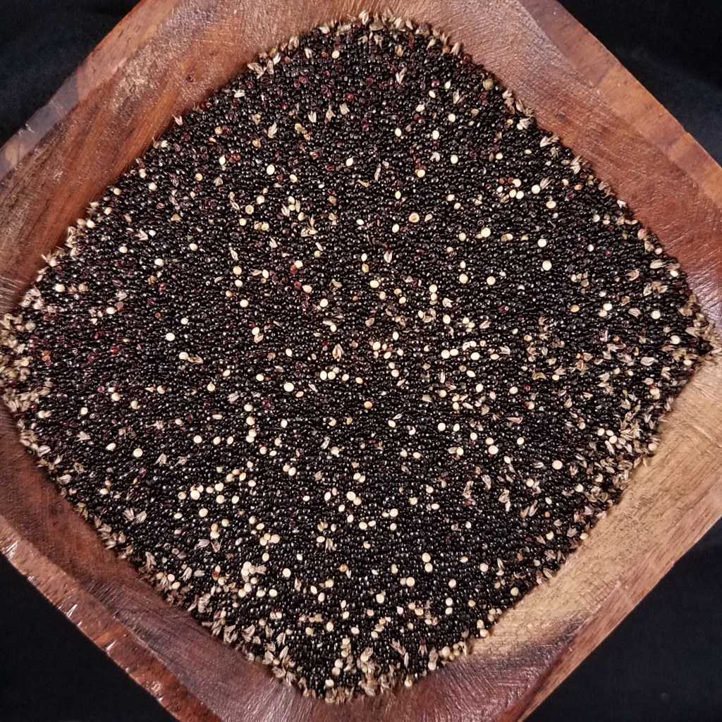 A mixture of wild and cultivated amaranth seed ... and chaff!