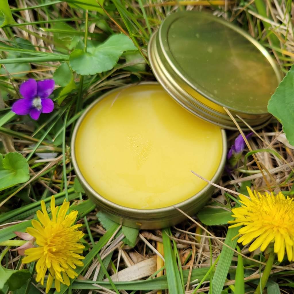 Spring Salve using hyperlocal foraged medicinal herbs