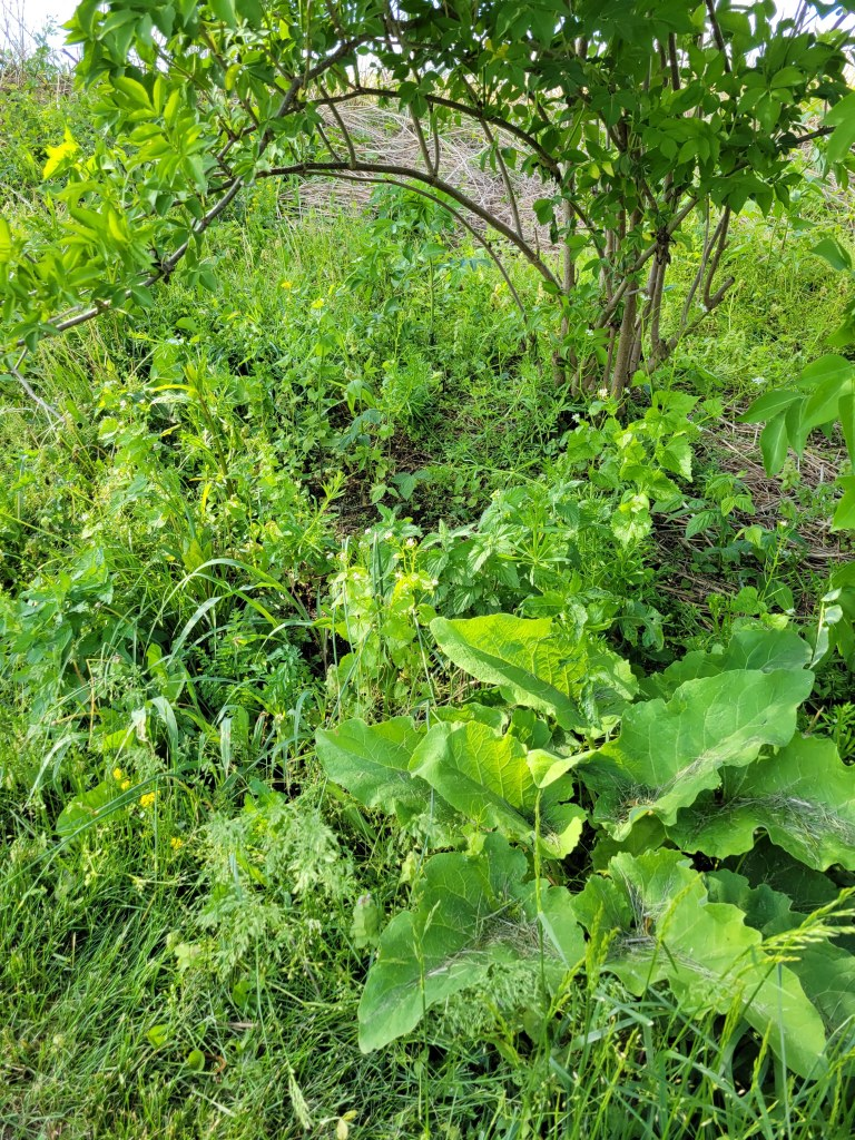 Another assortment of wild and medicinal plants