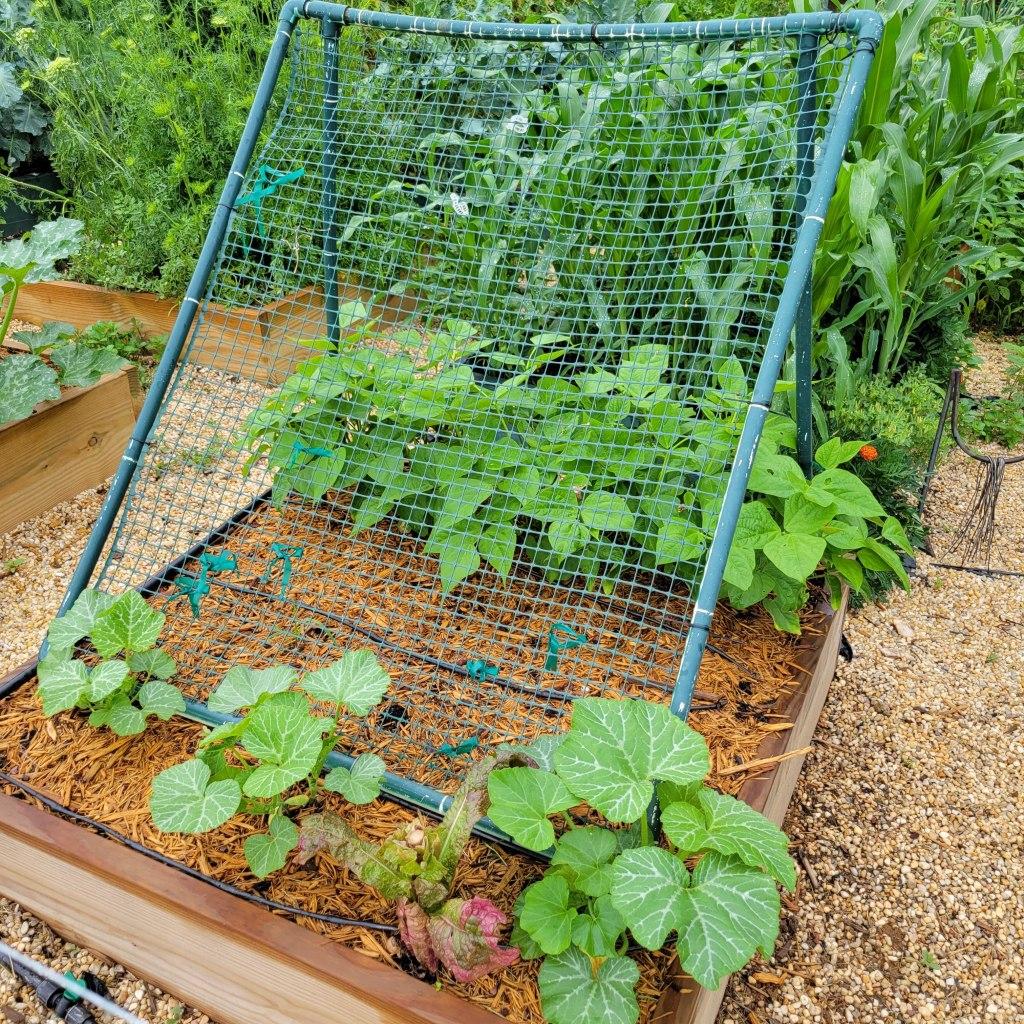 2021 Garden Bed A1