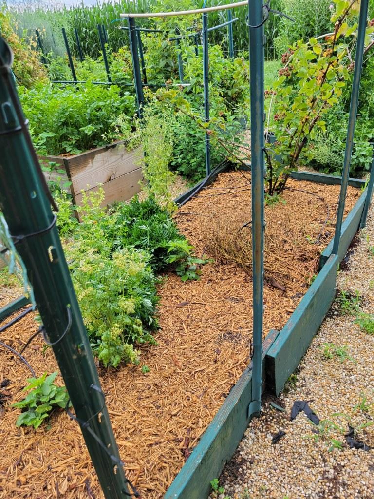2021 Garden Beds A6 & B6