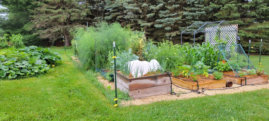 My garden in 2021