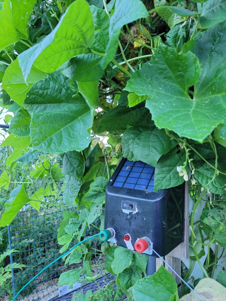 My solar fence charger, chilling in the shade